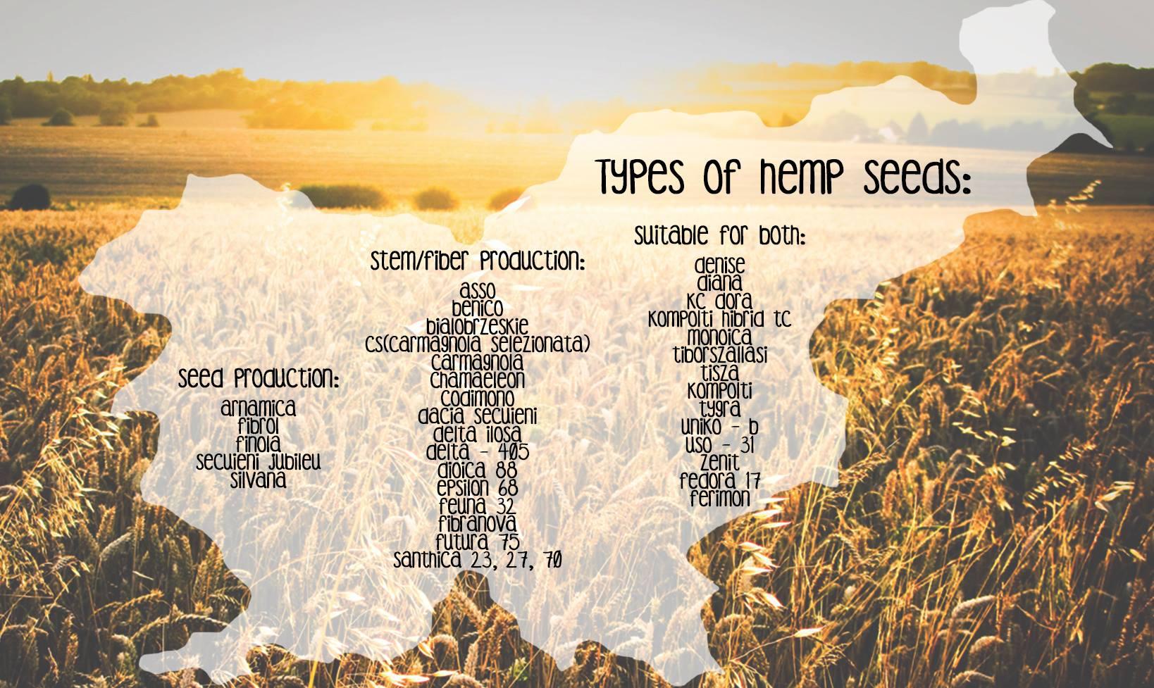 Production of hemp clothing in Europe ~ Switch Hempwear